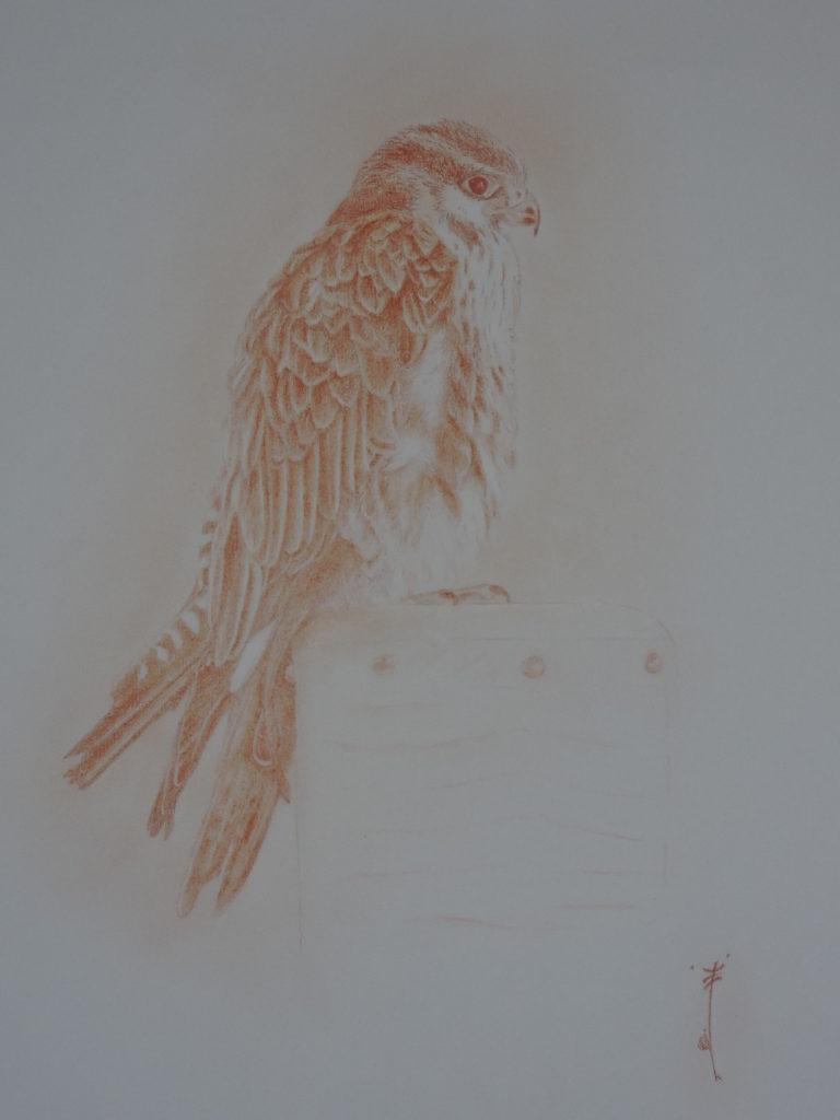 Les ailes de l'urga